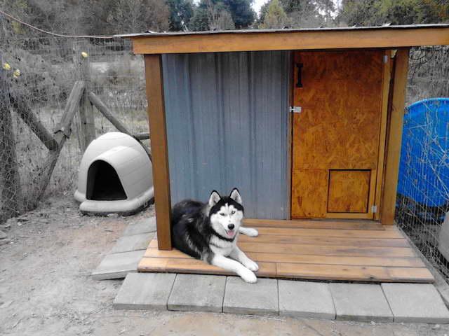 Kennel For Husky