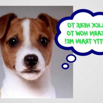 How To Potty Train My Jack Russell Puppy