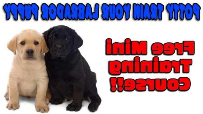 How To Train A Labrador Puppy To Potty