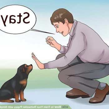 How To Train Rottweiler Puppy
