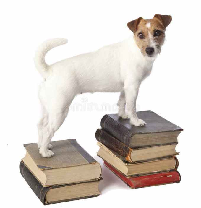 Jack Russell Books