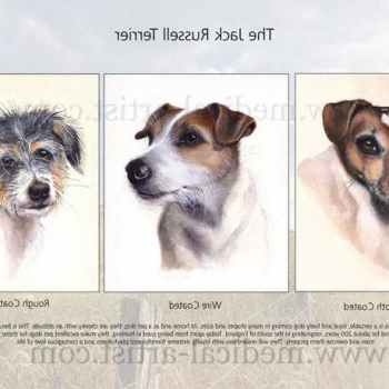 Jack Russell Posters