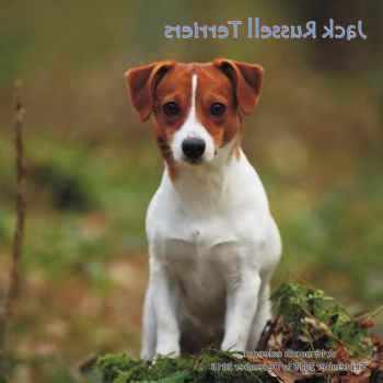 Jack Russell Terrier Calendar