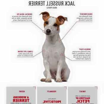 Jack Russell Terrier Training Secrets
