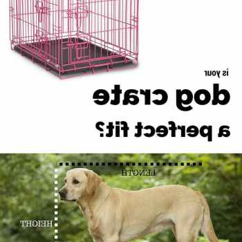 Kennel Size For Labrador