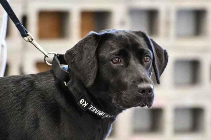 Labrador Training Schools