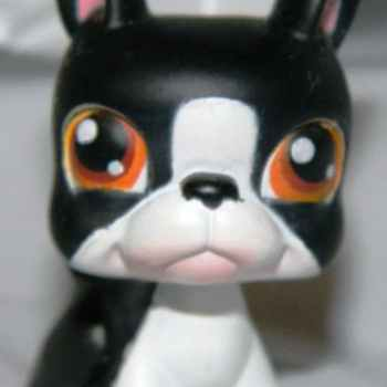 Littlest Pet Shop Boston Terrier