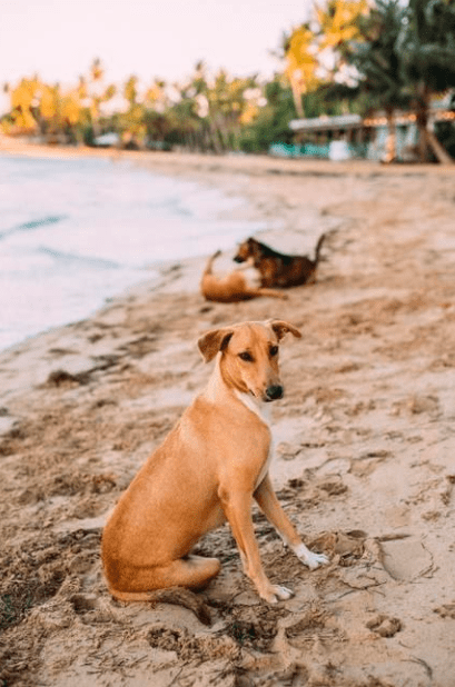 Adopting a Stray Dog From Abroad