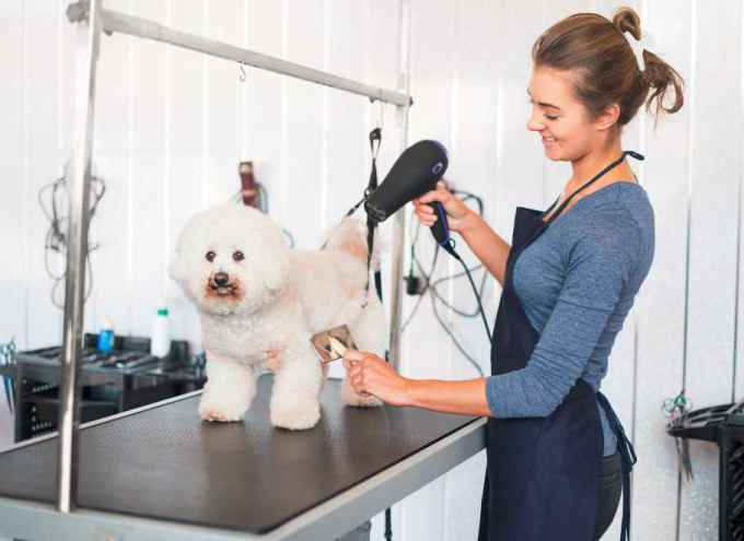 do you tip for dog grooming