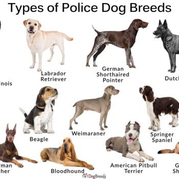 Police Dog Breed