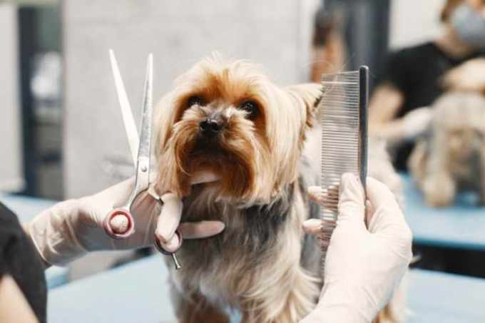 cost for dog grooming