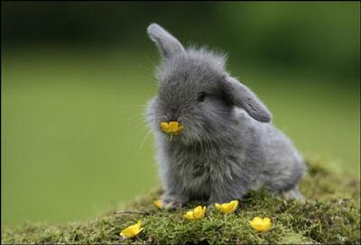 """Résultat de recherche d'images pour """"lapin"""""""