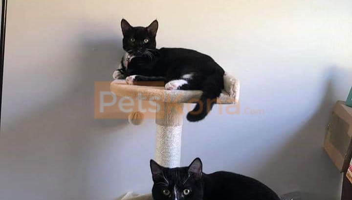 2 loving cats looking for a great home