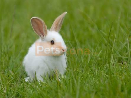 Cute rabbits !