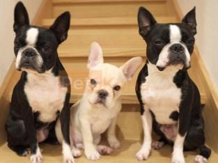 Hunde und Welpen zur Adoption verfügbar