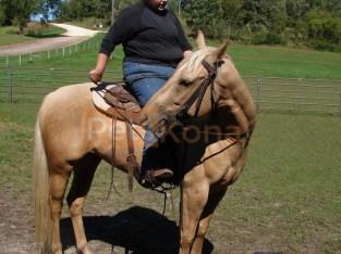Smart and Marvelous Quarter Horse Gelding for sale