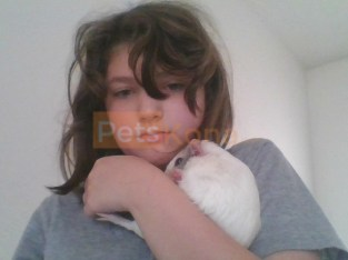2 female guinea pig with all supplies for $200