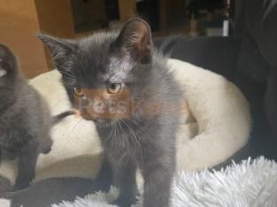 Kittens for good home