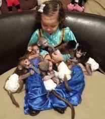USDA registered capuchin monkeys available
