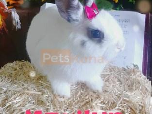 Dwarf rabbits needing homes