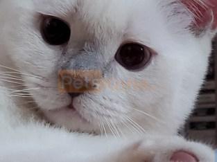 straight kitten