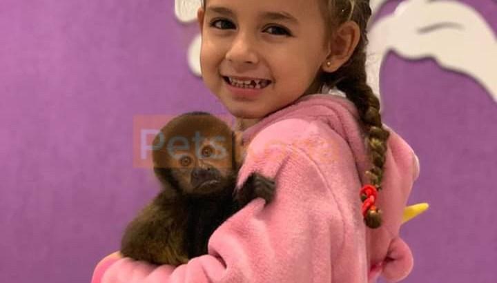 baby capuchin monkeys for sale near me
