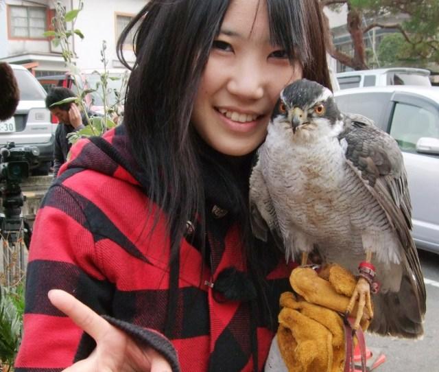 Japanese Schoolgirl Is Falcon Good At Fighting Pesky Crows Petslady Com