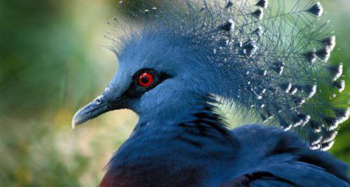 Animated Peacock Wallpapers Bing S Top 10 Beautiful Bird Desktop Backgrounds