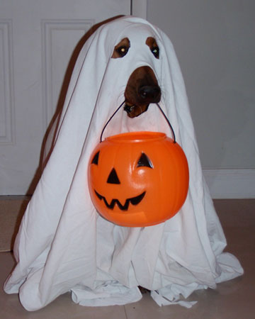Image result for cute ghost dog