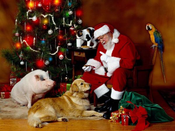 """Image result for pets with santa"""""""