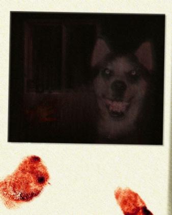 Dog Smiling Meme : smiling, Horror, Smile, Petslady.com