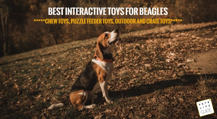Toys for Beagle Dogs