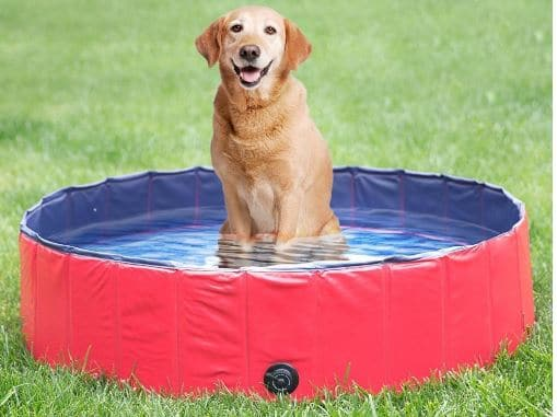 NACOCO Foldable PVC Dog Outdoor Swimming Pool review