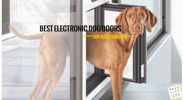 Automatic Doggie Doors
