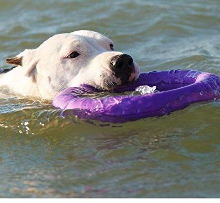 COLLAR Professional Dog Training Equipment Puller Plus