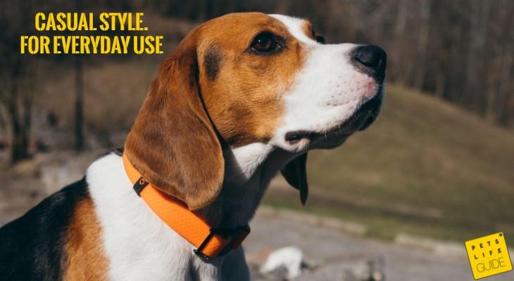 Best Regular Collar for Beagle