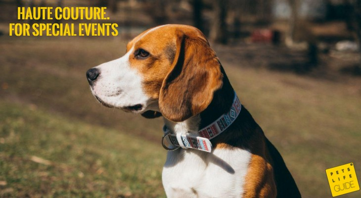 Best Leather Collar for Beagle