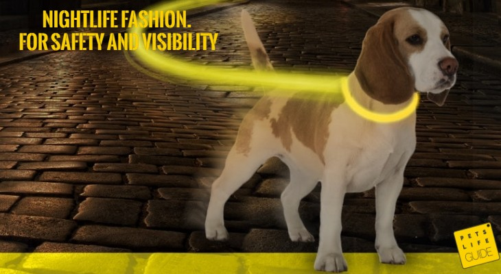 Best LED Collar for Beagle