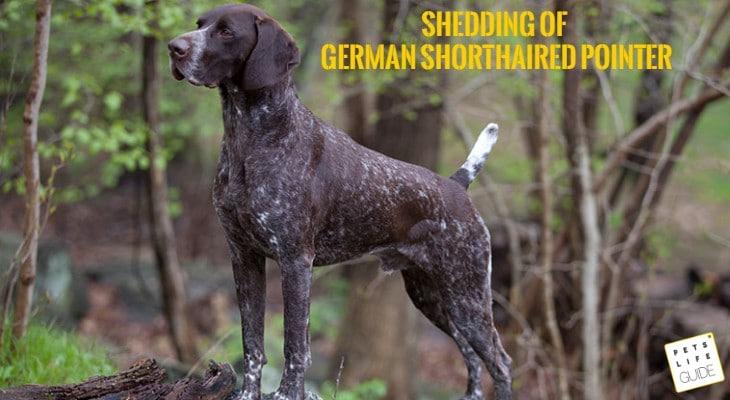 GSP shedding