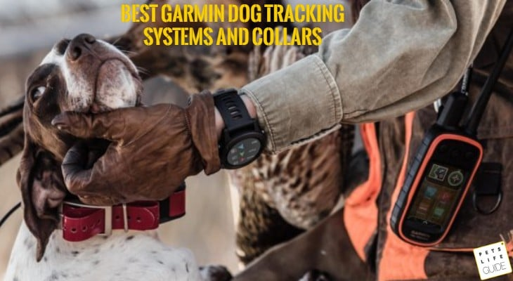 GSP track collar
