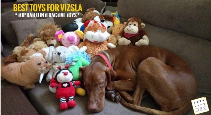 DogToys for Hungarian Vizsla
