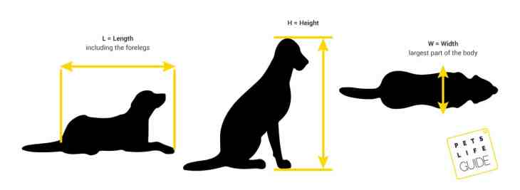 how to measure a crate for dog