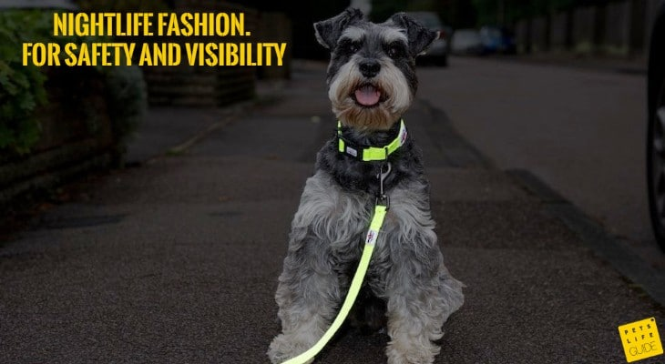 reflective collar for mini