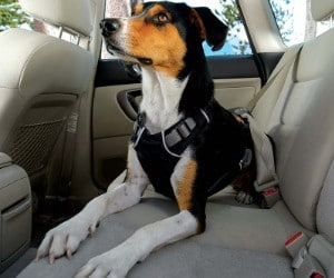 RUFFWEAR - Load Up, Dog Car Harness review