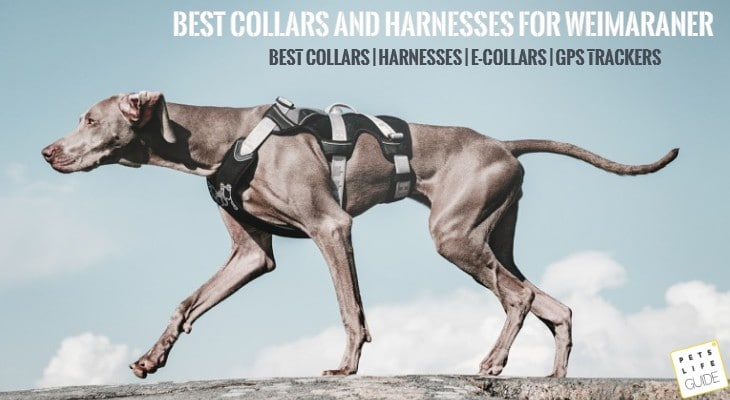 best collars and harnesses for weimaraner