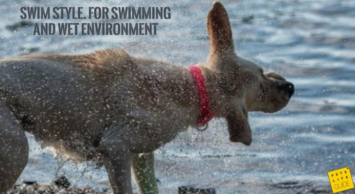 Waterproof collar for Labrador