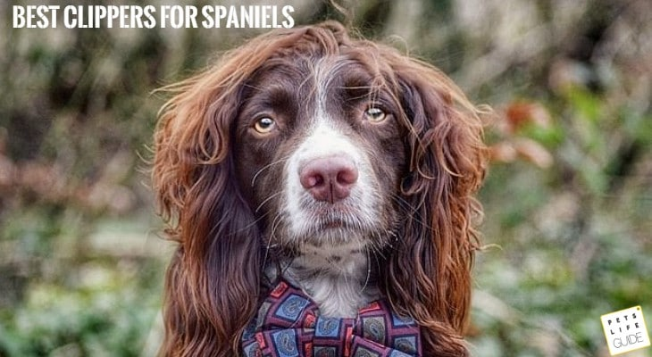 Best Clippers for Spaniels
