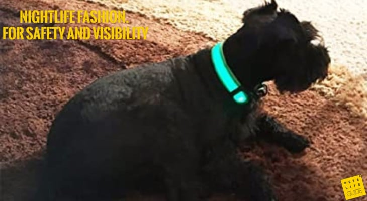 LED Collars for Giant Schnauzer