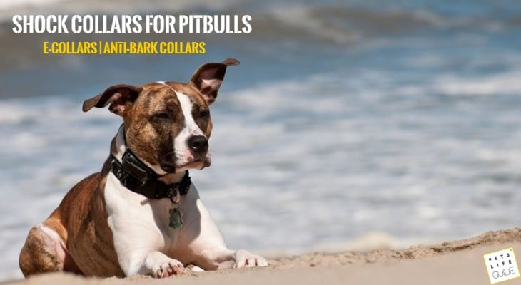 best shock collars for pitbulls