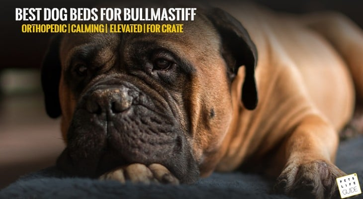 Best Dog Bed for Bullmastiff